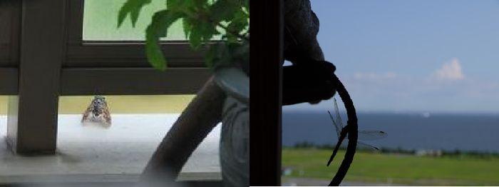 ひっそり、蝉とトンボ。